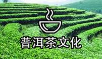 茶马古道珍藏普洱图片